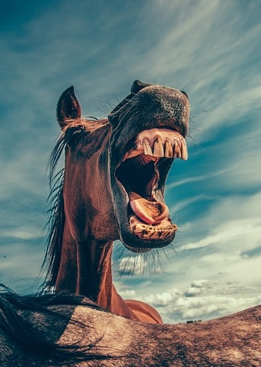 L'importance des dents chez le cheval