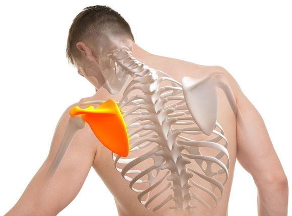 Une douleur à l'omoplate : et si on en parlait à son ostéopathe ?